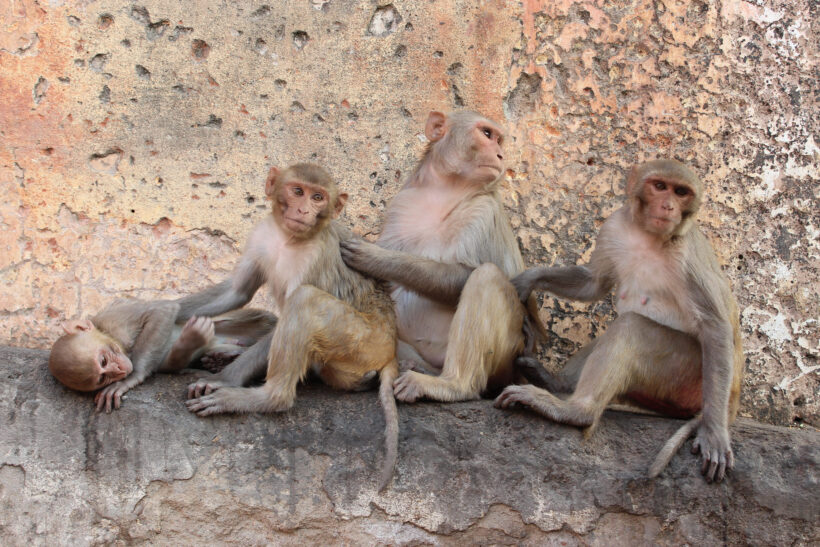 hình ảnh khỉ ngộ nghĩnh