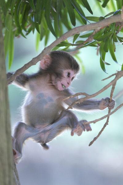 hình ảnh khỉ ngộ nghĩnh đang leo trèo