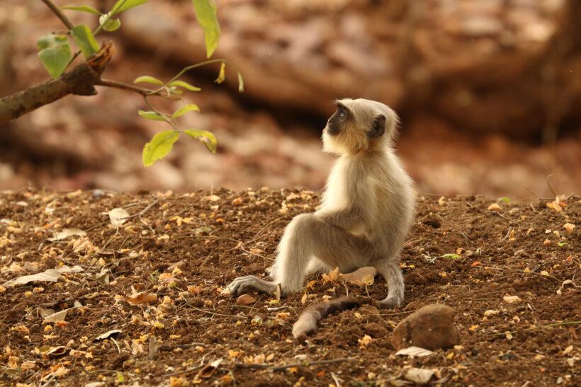 hình ảnh khỉ ngộ nghĩnh trong khu rừng