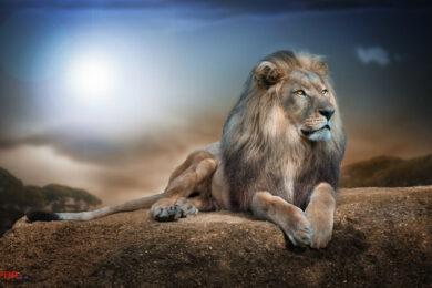 hình ảnh nền sư tử