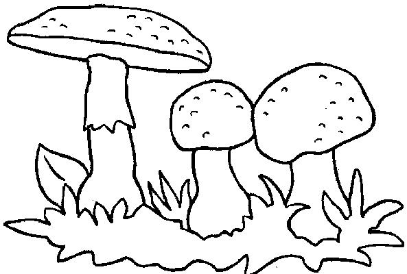 Hình tô màu cây nấm đẹp nhất cho bé tập tô (1)