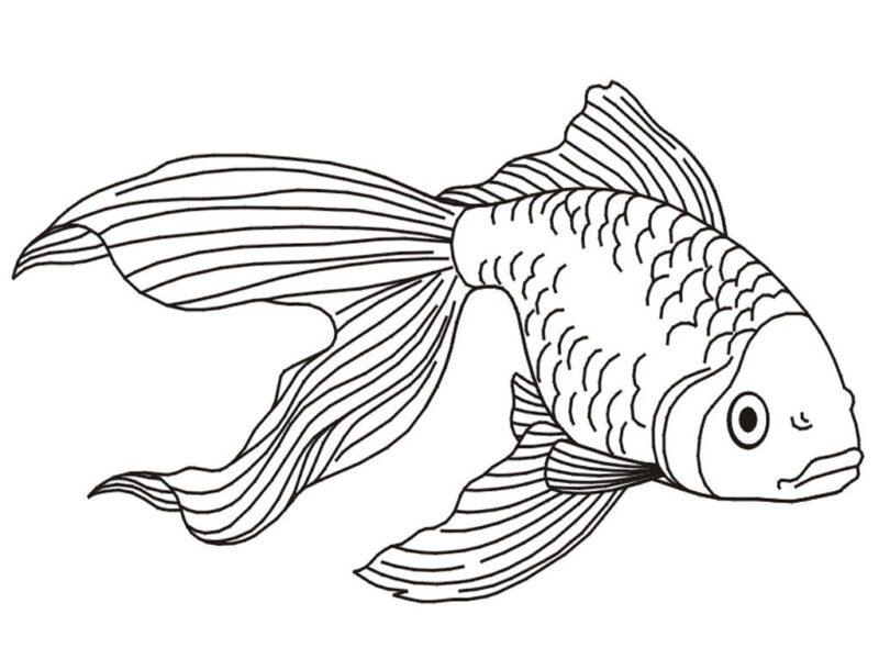 Hình tô màu chú cá vàng đẹp nhất cho bé tập tô (5)