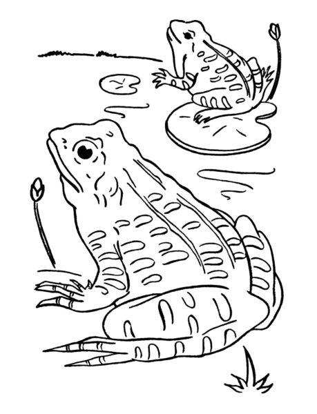 Hình tô màu con ếch cho bé tập tô (4)