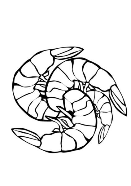 Hình tô màu con tôm đẹp cho bé tập tô (1)