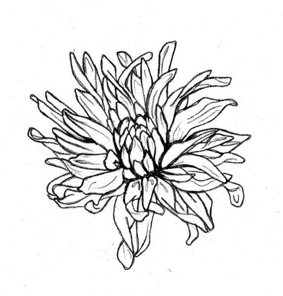 Hình tô màu hoa cúc cho bé tập tô (4)
