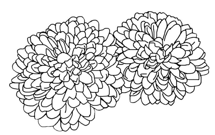Hình tô màu hoa cúc cho bé tập tô (5)