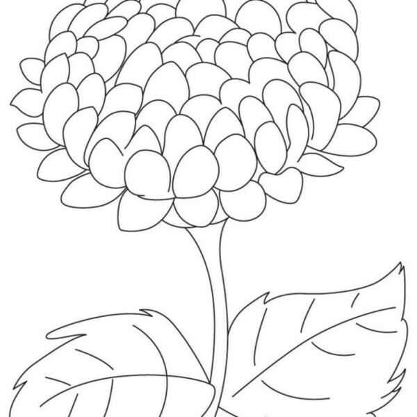 Chrysanthemum coloring pages Lovely big chrysanthemum coloring page free big chrysanthemum