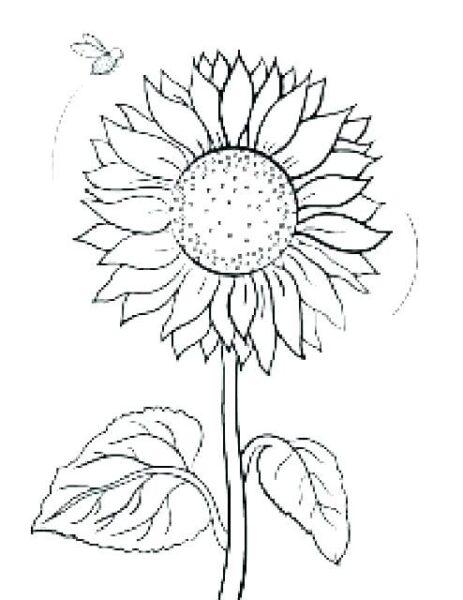 Hình tô màu hoa hướng dương (2)