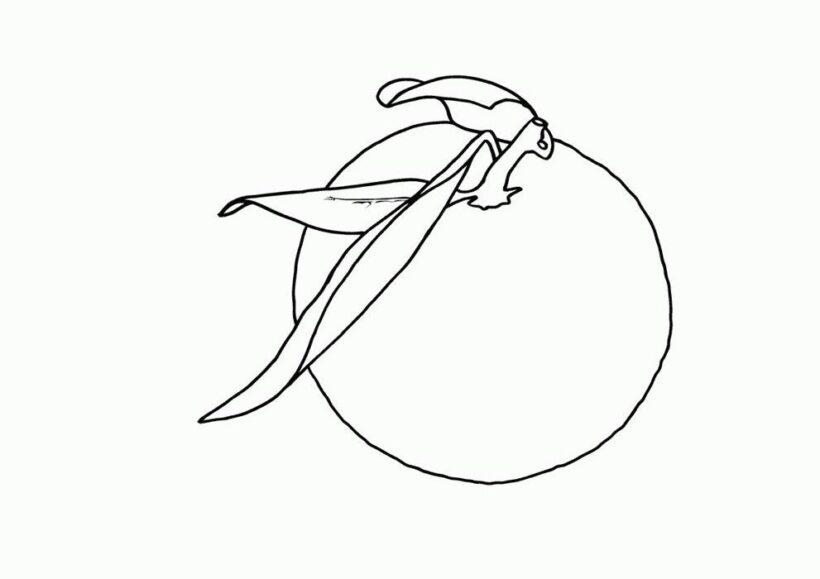 Hình tô màu quả cam đơn giản cho bé tập tô (3)