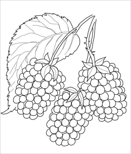 Hình tô màu rau củ quả cho bé tập tô (2)