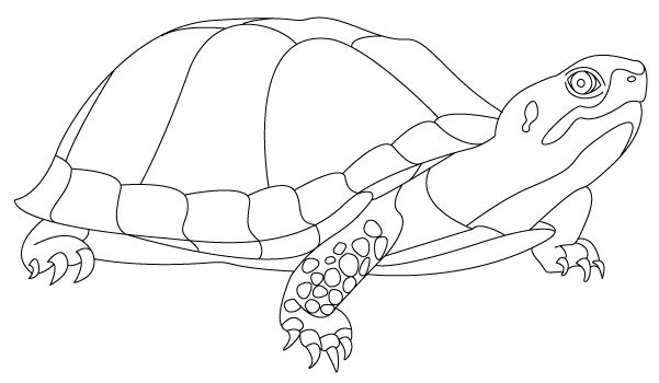 Hình tô mù con rùa cho bé tập tô (6)