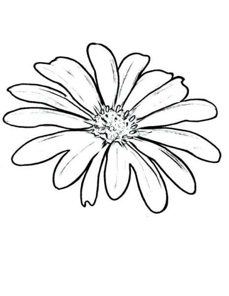 Hình vẽ chưa tô màu hoa cúc cho bé tập tô (1)