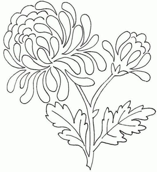 Hình vẽ chưa tô màu hoa cúc cho bé tập tô (4)