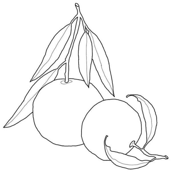 Hình vẽ chưa tô màu quả cam mọng nước cho bé tập tô (5)