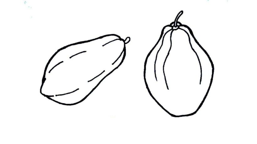 how to draw papaya fruit step step in easy way drawing