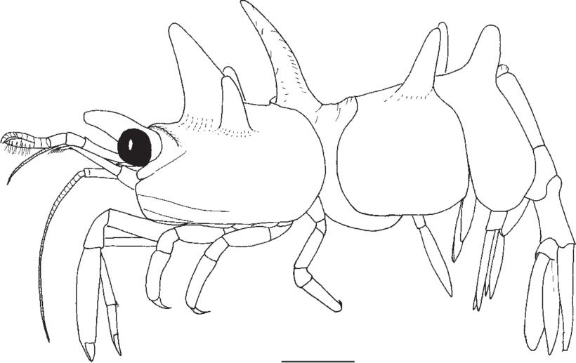 Hình vẽ đen trắn con tôm cho bé tô màu (2)