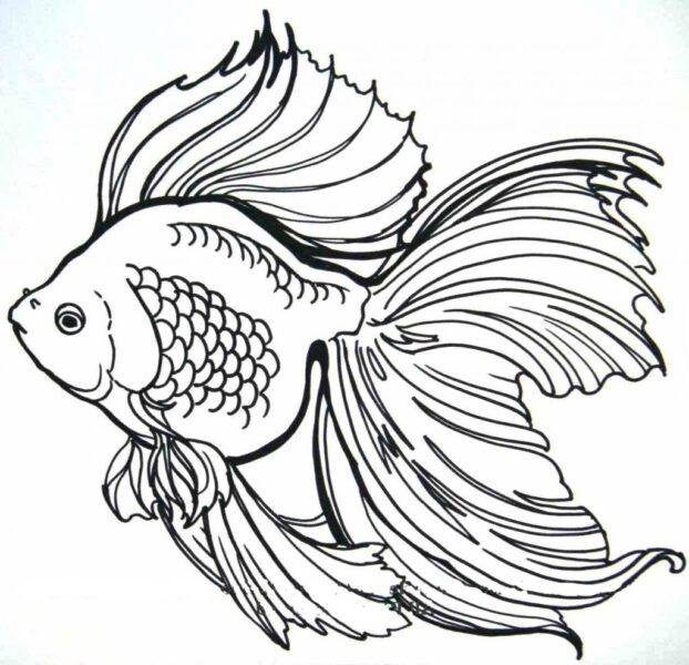 Hình vẽ đen trắng chú cá vàng cho bé tô màu (2)