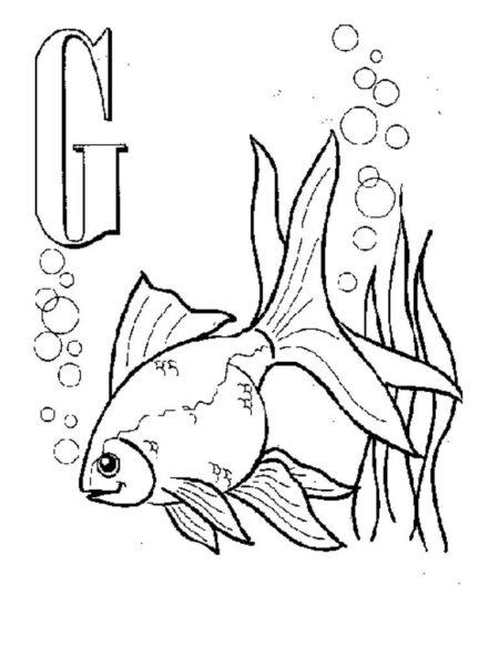 Hình vẽ đen trắng chú cá vàng cho bé tô màu (3)