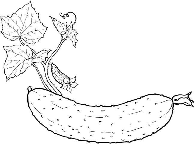 Hình vẽ đen trắng rau củ quả cho bé tô màu (6)