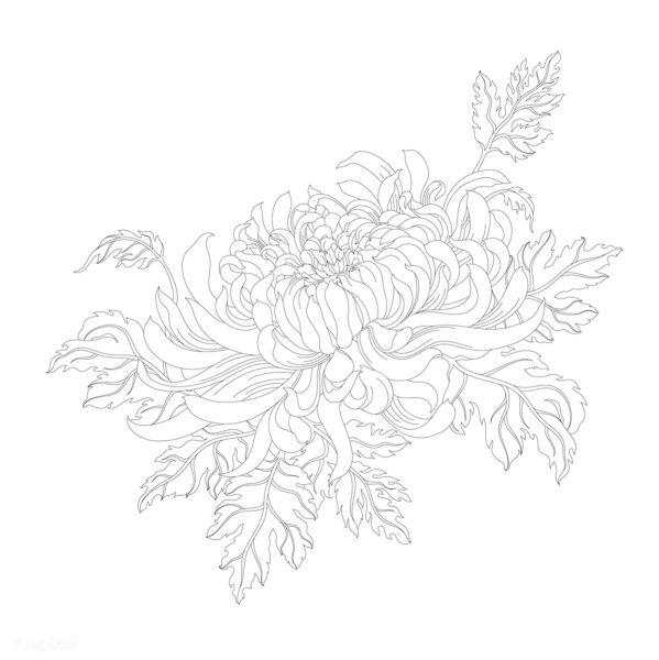 Hình vẽ tập tô hoa cúc (2)