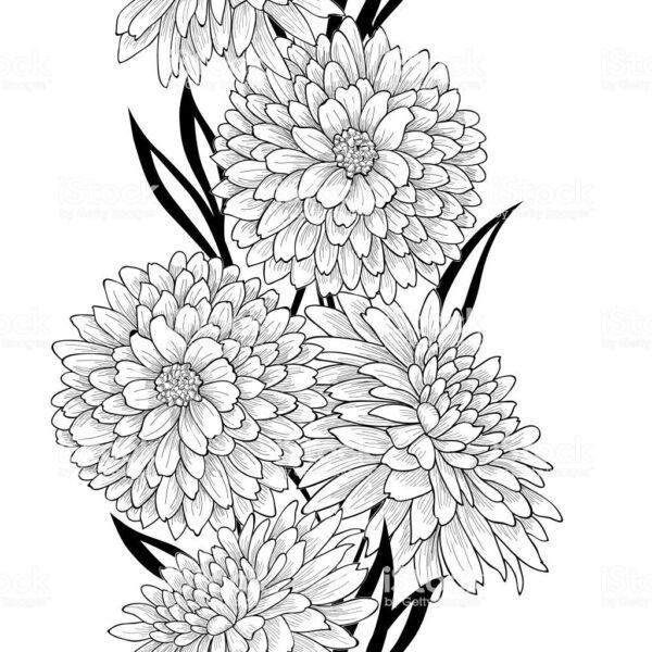Hình vẽ tập tô hoa cúc (5)
