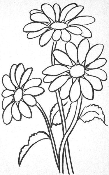 Hình vẽ tập tô hoa cúc (6)