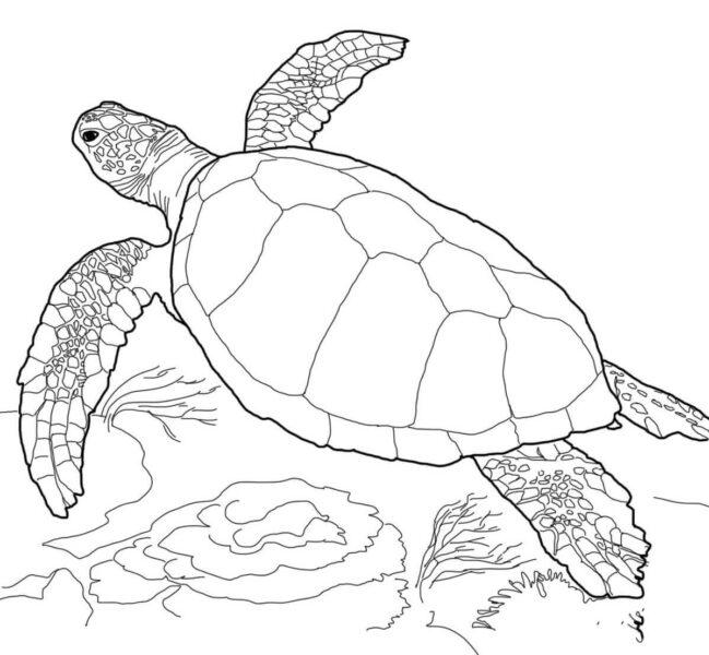 Mẫu tranh tô màu con rùa cho bé tập tô (3)