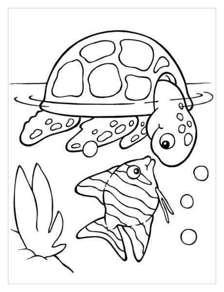 Mẫu tranh tô màu con rùa cho bé tập tô (5)