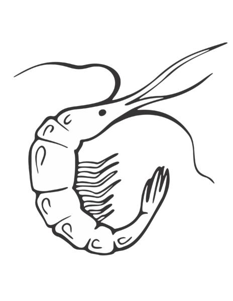 Mẫu tranh tô màu con tôm cho bé tập tô (3)