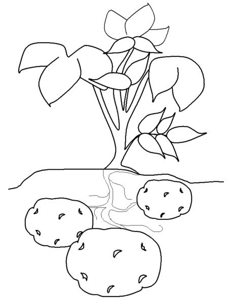 Mẫu tranh tô màu củ khoai lang đơn giản cho bé tập tô (3)