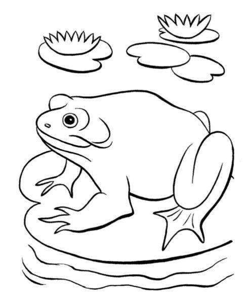 Những tranh tô màu con ếch cho bé tập tô (2)