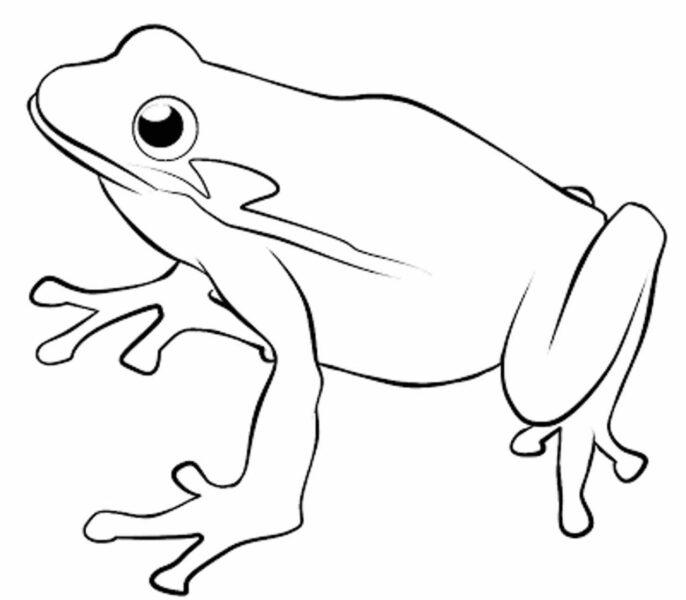 Những tranh tô màu con ếch cho bé tập tô (4)