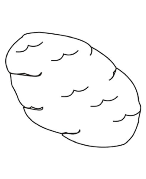 Những tranh tô màu củ khoai lang đơn giản cho bé tập tô (5)
