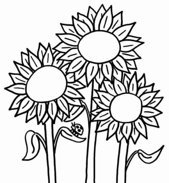Những tranh tô màu hoa hướng dương cho bé tập tô (2)