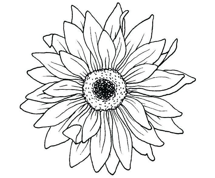 Những tranh tô màu hoa hướng dương cho bé tập tô (4)