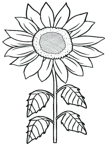 Những tranh tô màu hoa hướng dương cho bé tập tô (7)