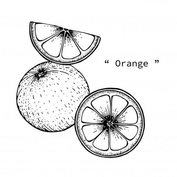 Những tranh tô màu quả cam cho bé tập tô (3)