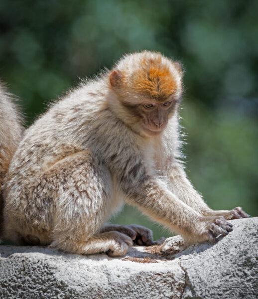 tải ảnh khỉ đẹp nhất