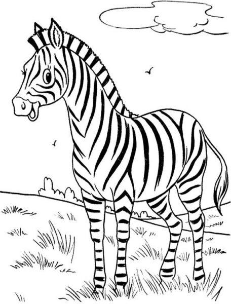 Tô màu con ngựa vằn