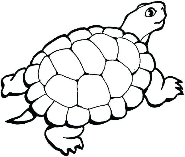 Tô màu con rùa