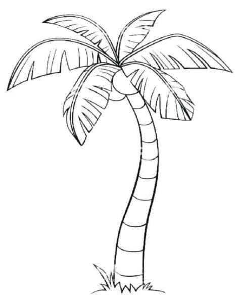 Tranh cây dừa