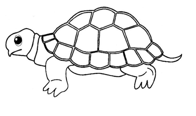 Tranh con rùa