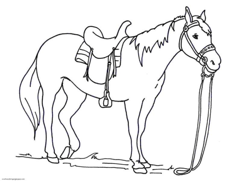 Tranh tô màu con ngựa đẹp nhất cho bé tập tô (24)