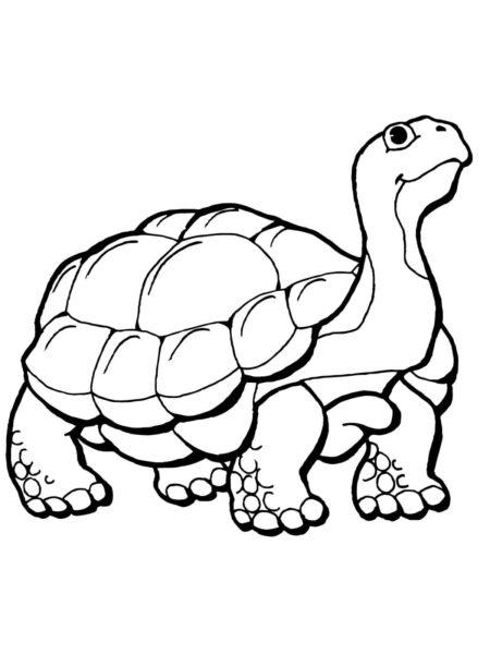 Tranh tô màu con rùa cho bé tập tô (25)