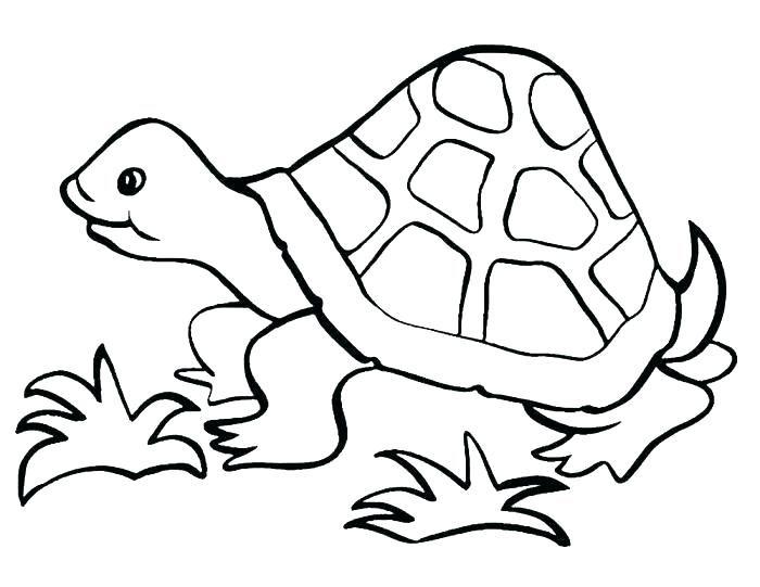 Tranh tô màu con rùa cho bé tập tô (26)