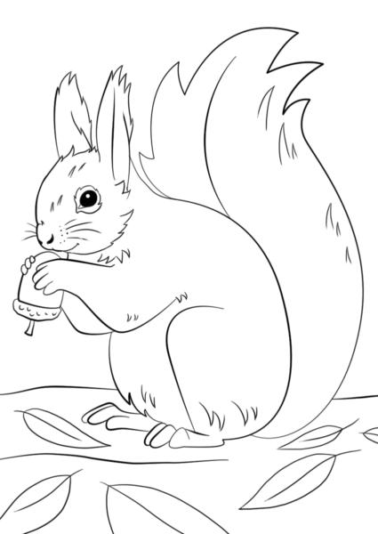 Tranh tô màu con sóc cho bé tập tô (1)