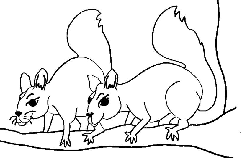 Tranh tô màu con sóc cho bé tập tô (11)