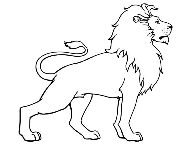 Tranh tô màu con sư tử đẹp nhất cho bé tập tô (12)