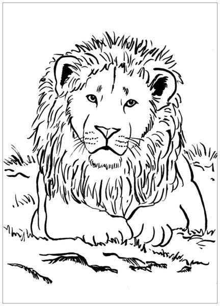 Tranh tô màu con sư tử đẹp nhất cho bé tập tô (19)