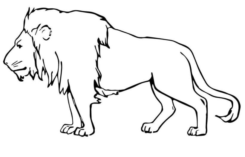 Tranh tô màu con sư tử đẹp nhất cho bé tập tô (22)